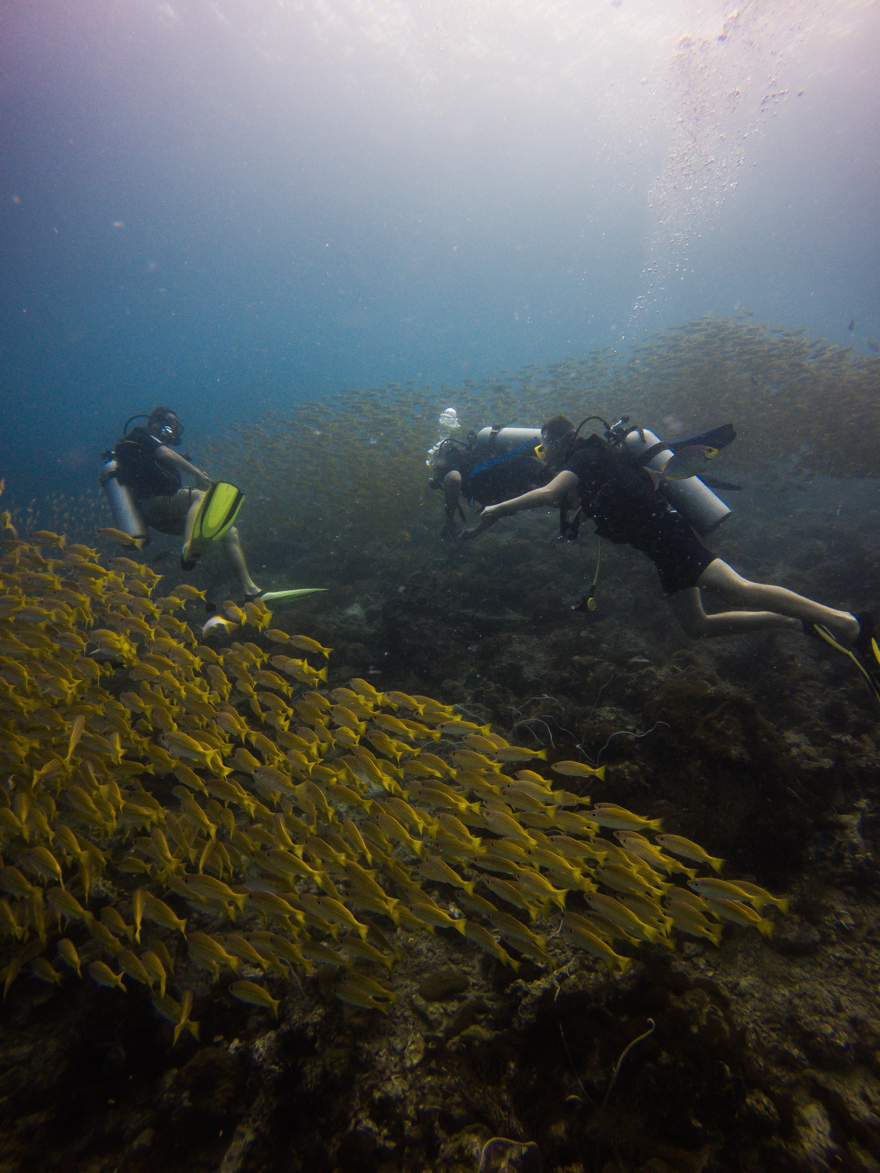 Dive Guide/Dive Master